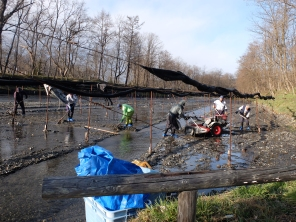 Wasabi farm workers