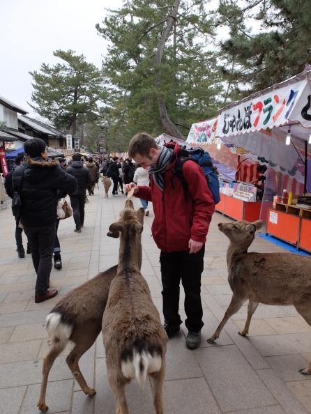 Matt-san feeding deer!