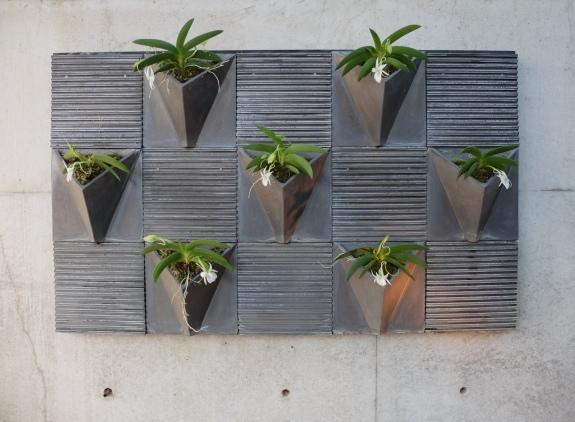 Angraecum leonis complementing Ando concrete