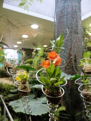 Masdevallias in wire