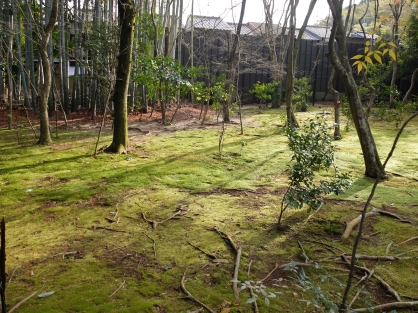 Komorebi at Jizo-in