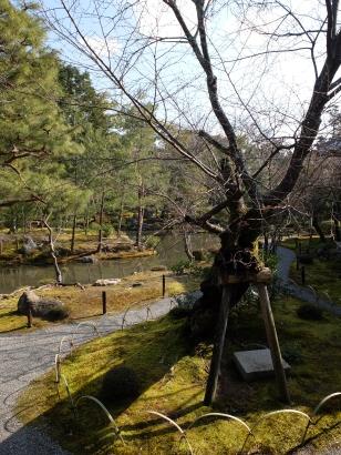 Toji-in: good tree