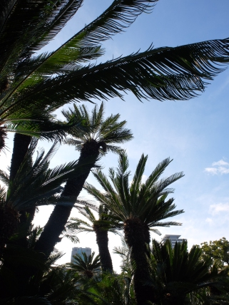 The garden has a lot of sago palms (Cycas revoluta), one 300 years old. Can you spot the male one in this photo?