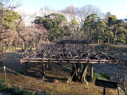 Amazing wisteria trellis