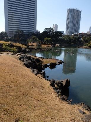 Rocky pond edge