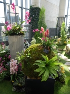 Arrangements in the main show space: I made the one at the back to Tomoko-san's design and designed & made the kokedama display at the front (with a lot of guidance!)