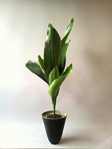 Shoka style, using one type of material. The most simple type of arrangement- except it's not at all simple.