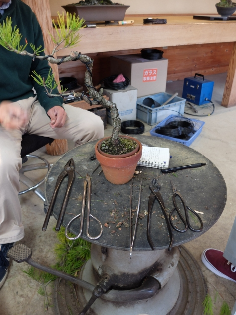Basic tools for bonsai, L-R: pliers, wire cutters, 'pinsett', hasami for cutting big branch, bonsai hasami