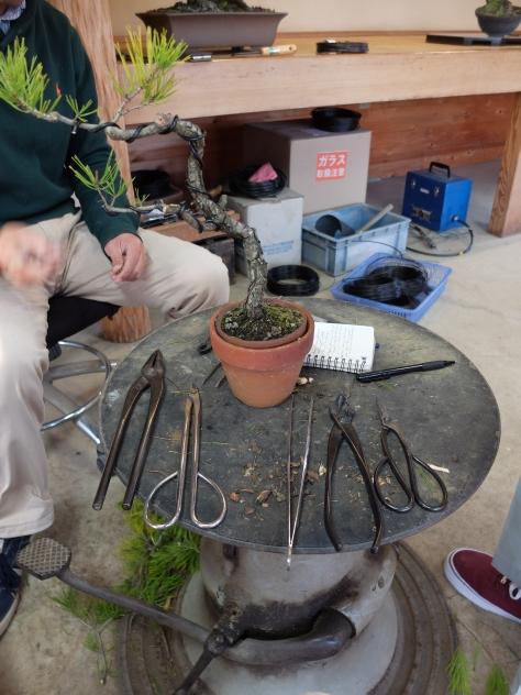 Basic tools for bonsai, L-R: pliers, wire cutters, 'pinsett', hasami for cutting big branch, bonsai hasami