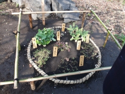 The seven spring herbs, traditionally consumed in a rice porridge at the end of NY celebrations in January. They may or may not be: Seri (water dropwart), Nazuna (shepherd's purse), Gogyou (cudweed), Hakobera (chickweed), Hotokenoza (nipplewort), Suzuna (turnip) and Suzushiro (radish)