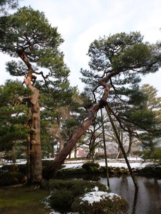 MASSIVE tree supports