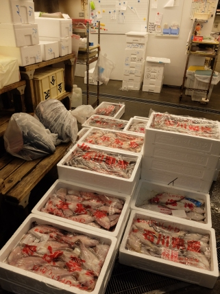 Fish just arrived at market
