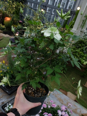 Turning this clematis into...