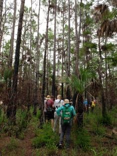 Walking through the Pinelands, burn mark visible
