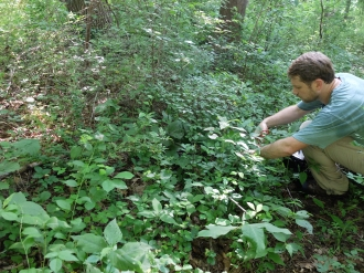 Peter collecting Cymbidium seed pods