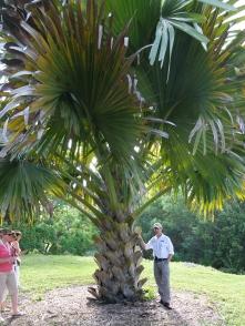 Big palms and Cycads at Block Botanical Center