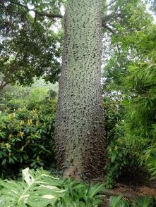 Floss tree?
