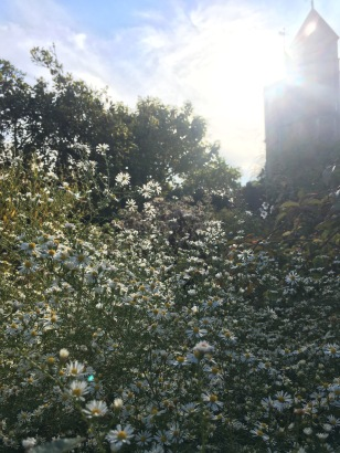Sissinghurst wasn't a bad place to spend the Autumn.
